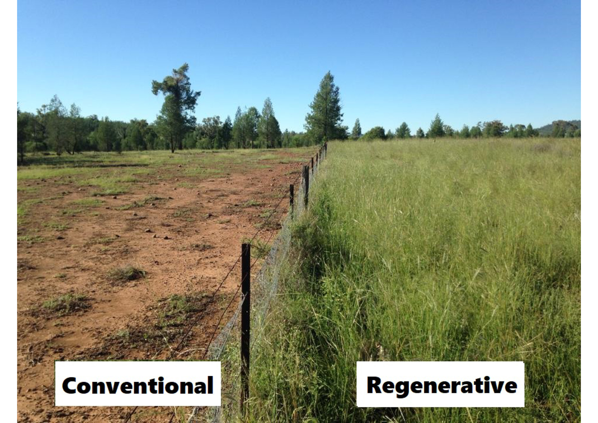 REGENERATIVE AGRICULTURE and RECOVERING FROM FIRE