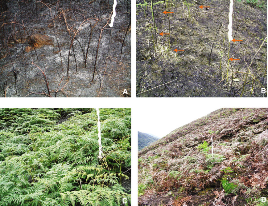 How to deal with post-fire weeds